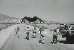 Tarantula6