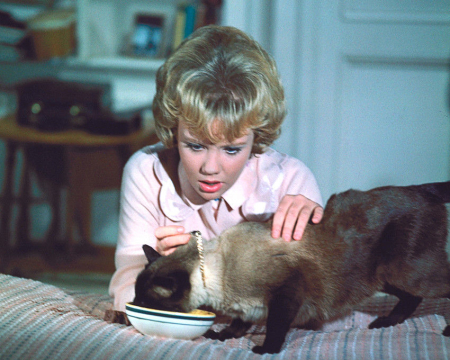 That darn cat 1965 b
