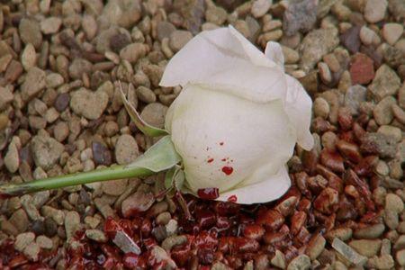 Vlcsnap-2015-06-16-14h42m08s142