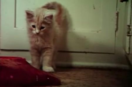 Beware the blob run kitty