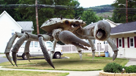 Queen crab 2015 a