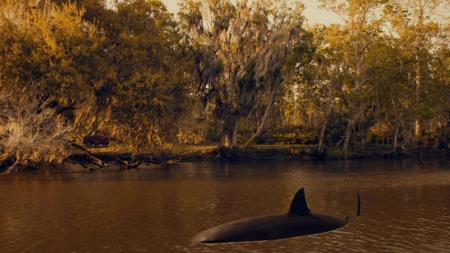 Trailer park shark 2017