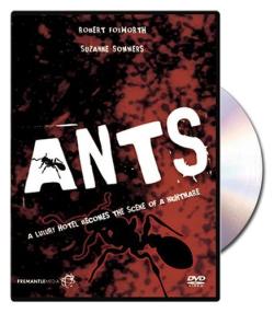 Ants 1977
