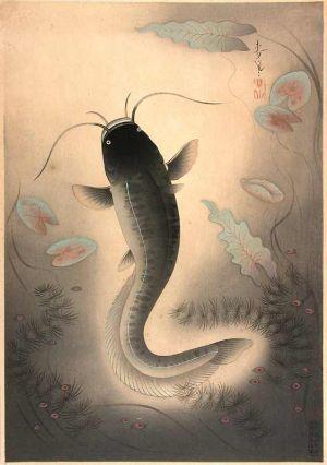 Bakufujapancatfish_2