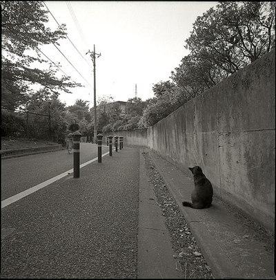Hosaka_cat
