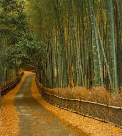 Bamboogrovelarge_2