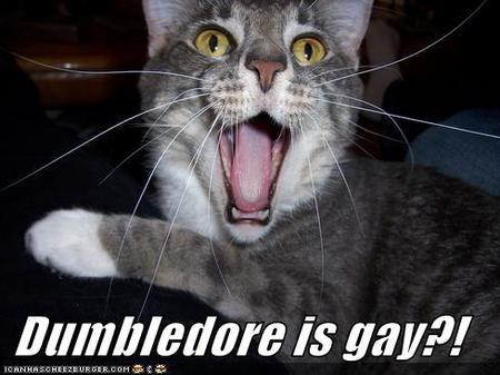 Dumbledoreisgaylolcat